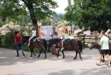 Прогулки на лошадях для детей