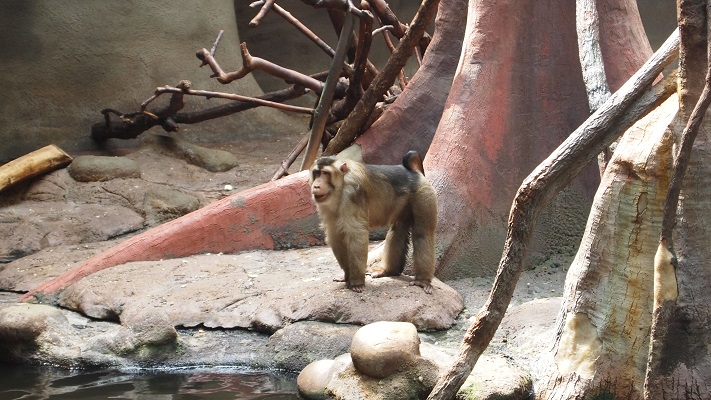 Прага зоопарк фото отзывы