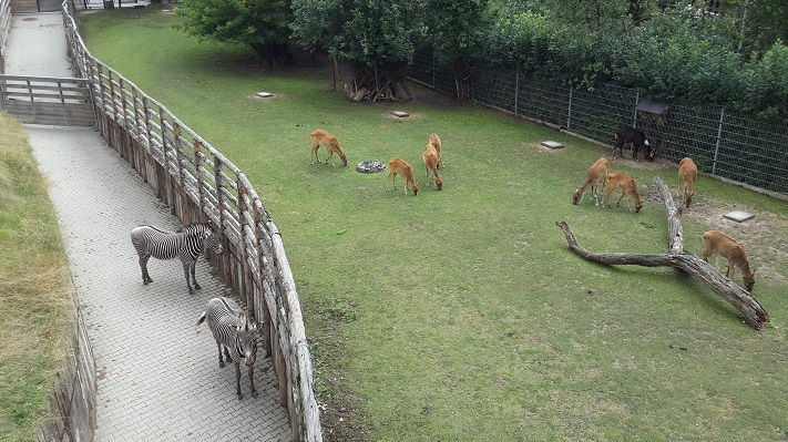 Вольер в зоопарке Праги