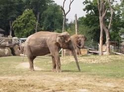 Зоопарк в Праге фото