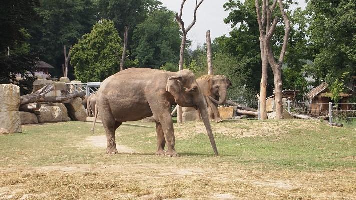 Пражский зоопарк принадлежит к