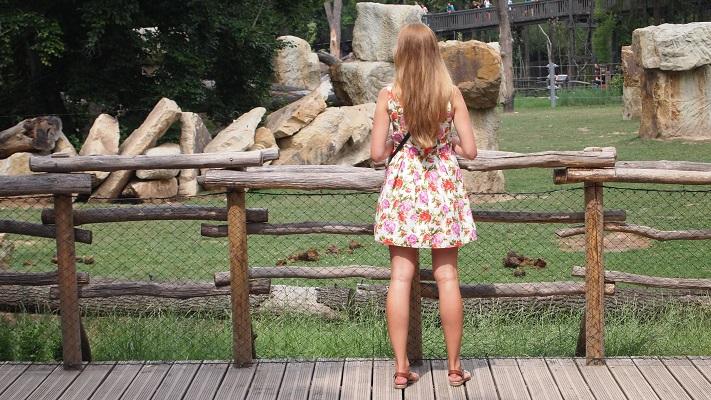 Ограждение в зоопарке Праги